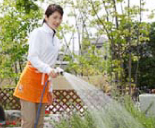 庭木の水遣り